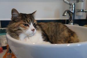housesitting rescue cat UK