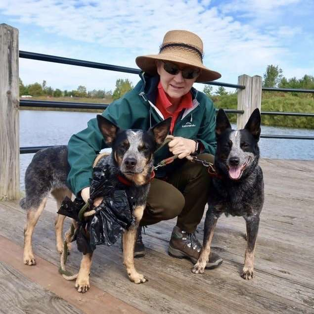 house sitting blue heelers