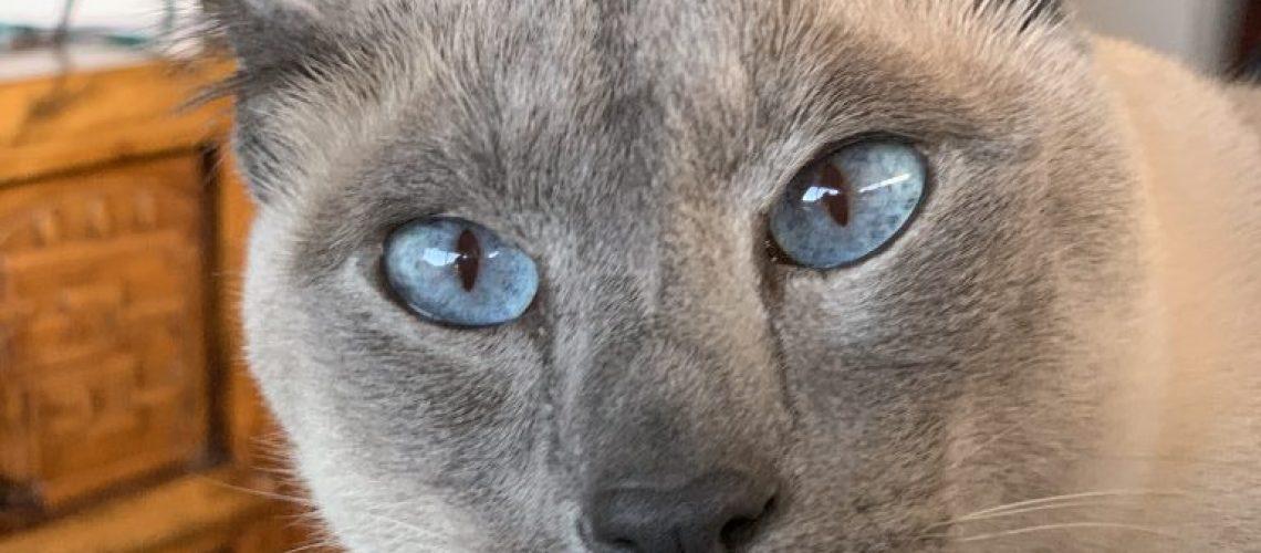 housesitting cat Australia